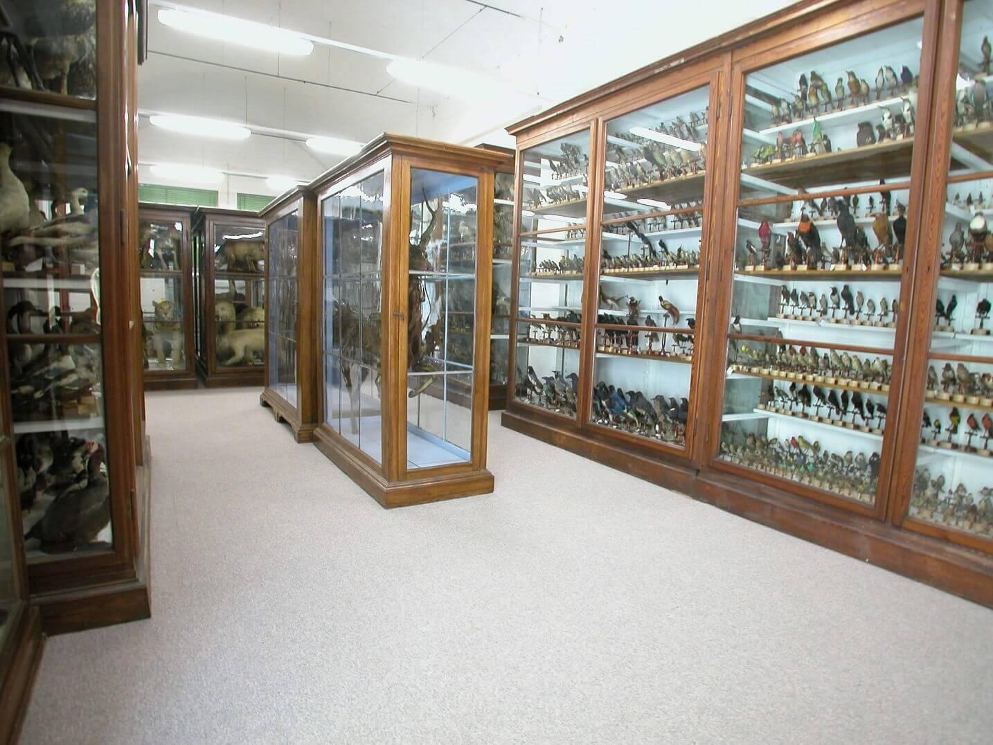 Musei dell'Università di Pavia: un tesoro spesso nascosto