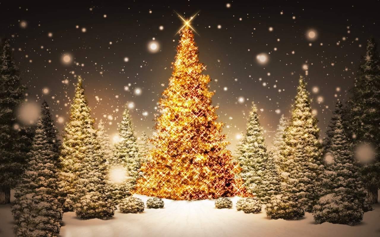 Foto Dell Albero Di Natale.La Storia Dell Albero Di Natale